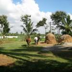 Sennathur - Pagliai e nostre mucche al pascolo