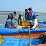 Le nuove barche tornano dalla prima pesca
